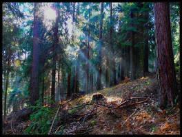 forest by Yassmine