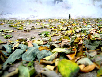 Autumn Leaves. by nutella-nat