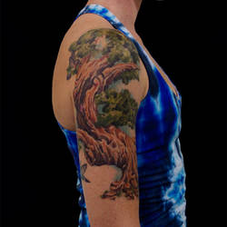 Tree HummingBirds
