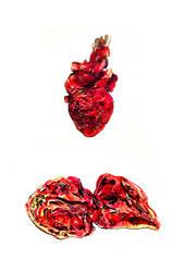 Open Heart by Razriel