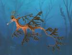 seahorse-practice-2