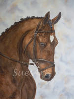 Danny the Bay Horse by SueMArt
