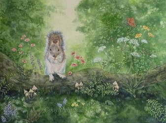 A Squirrels Life. by SueMArt
