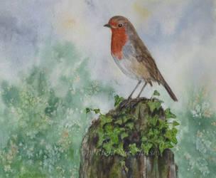 Robin Red Breast. by SueMArt