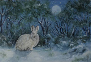 White Hare. by SueMArt