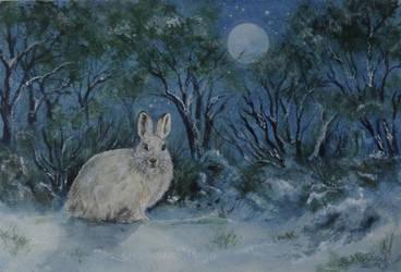 White Hare. by SueMArt