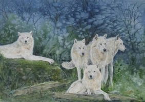 The White Wolf Pack. by SueMArt