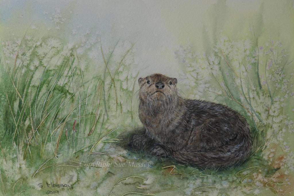 Little Otter. by SueMArt