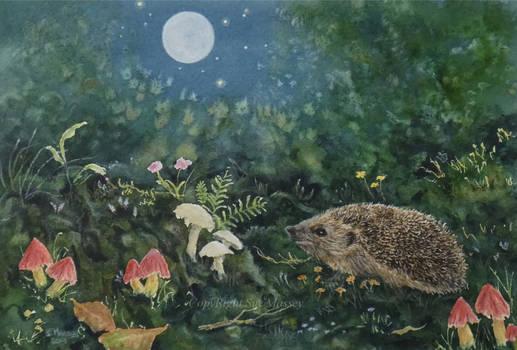 Hedgehog in the moonlight.
