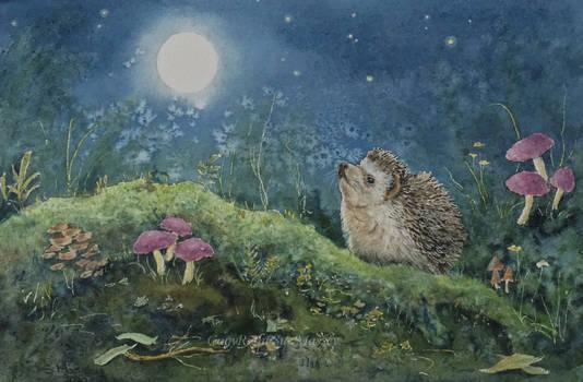 Moonlit Hedgehog.