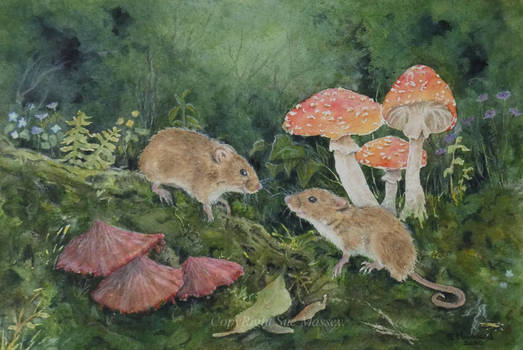The Harvest Mice