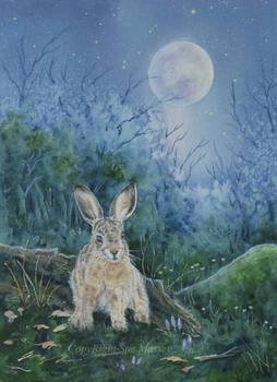 Hare in the Moonlight.