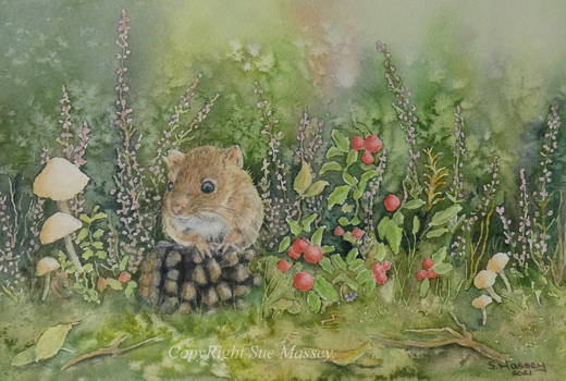 The Harvest Mouse.