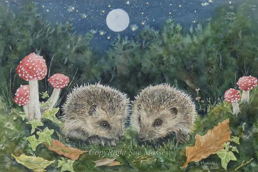 The Juvenile Hedgehogs