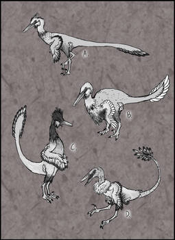 Spec Evo Challenge #5 - Buitreraptor Domestication