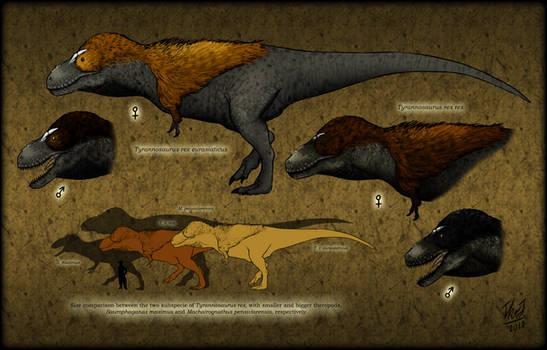 Tyrannosaurus rex subspecies