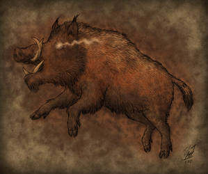 Father of Boars