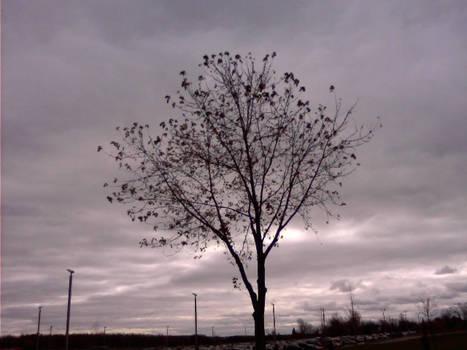 Tree Outside of School