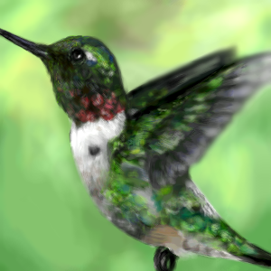 Hummingbird by SockArmy