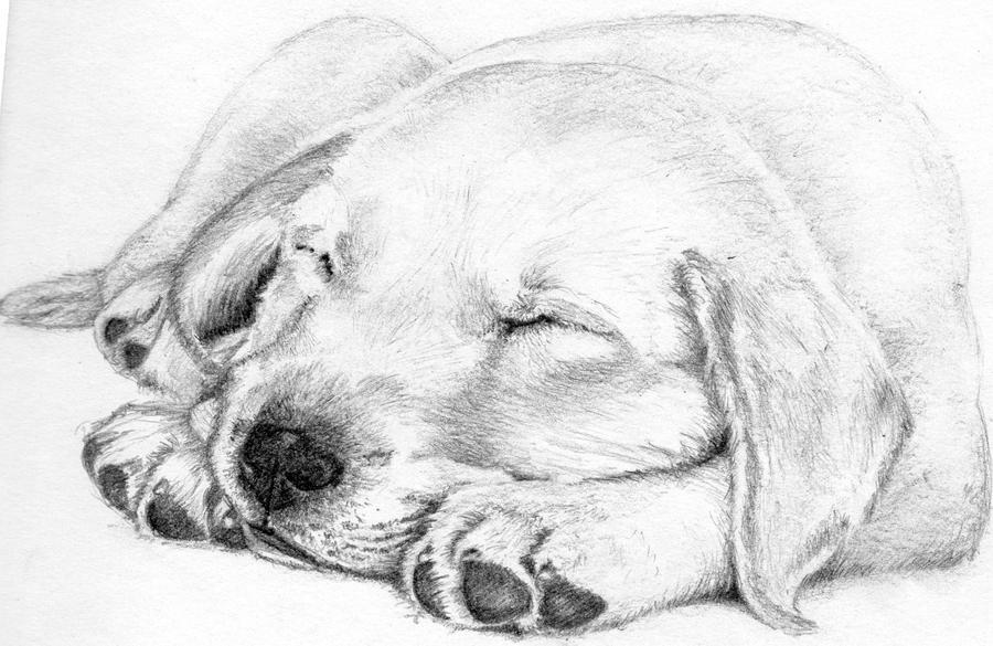 Doggie by marodorplanen