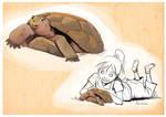 Gopher Tortoise Sketch
