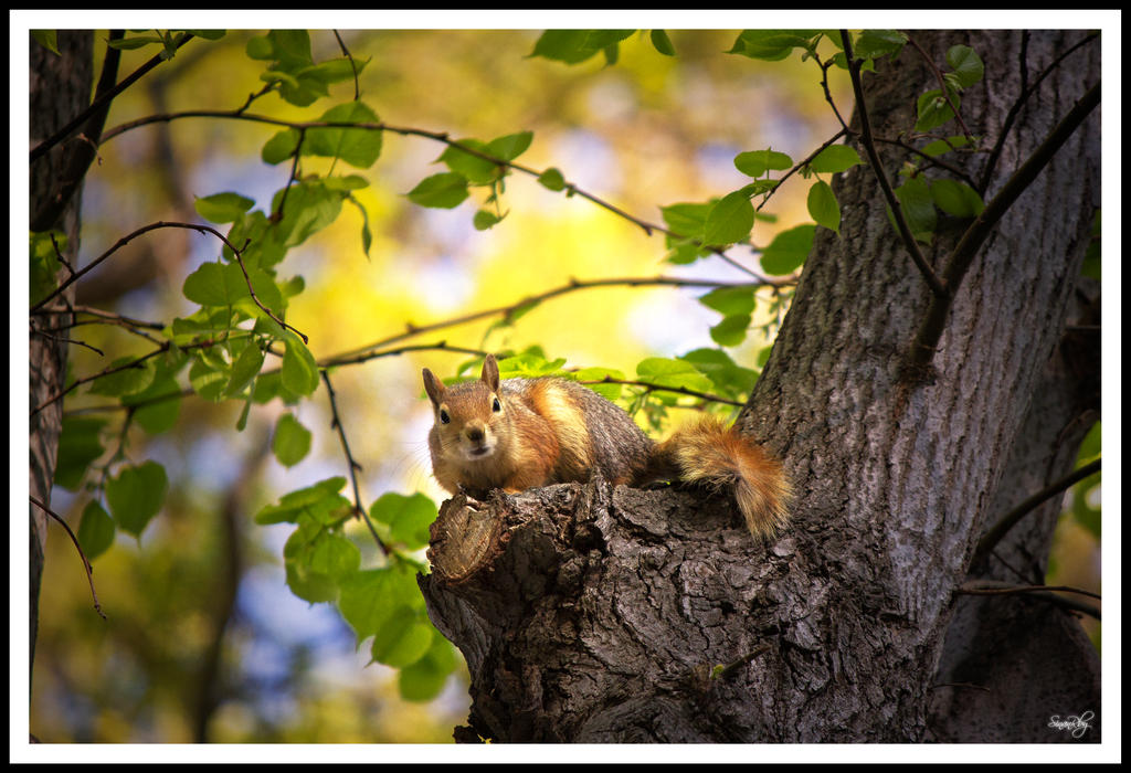 Little little squirrel by sinanrby