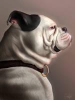 Pet portrait - Leia