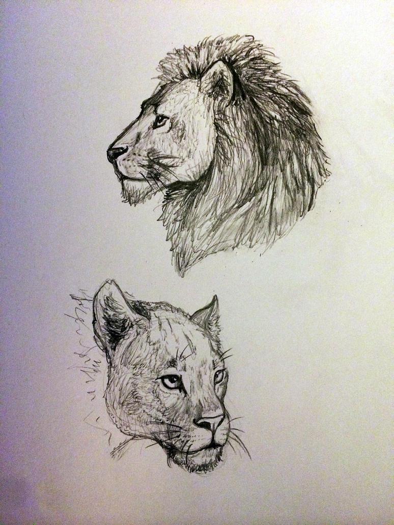 lion(ess) sketches by Kaleidokai