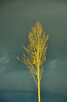One Tree Standing