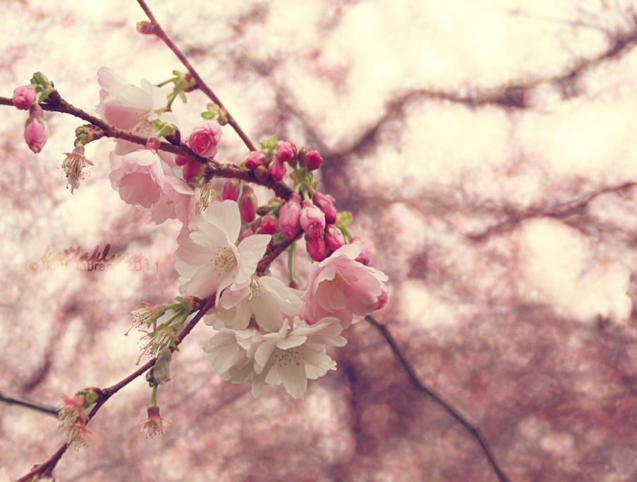 Spring Blossom by KaTT-a-KlysM