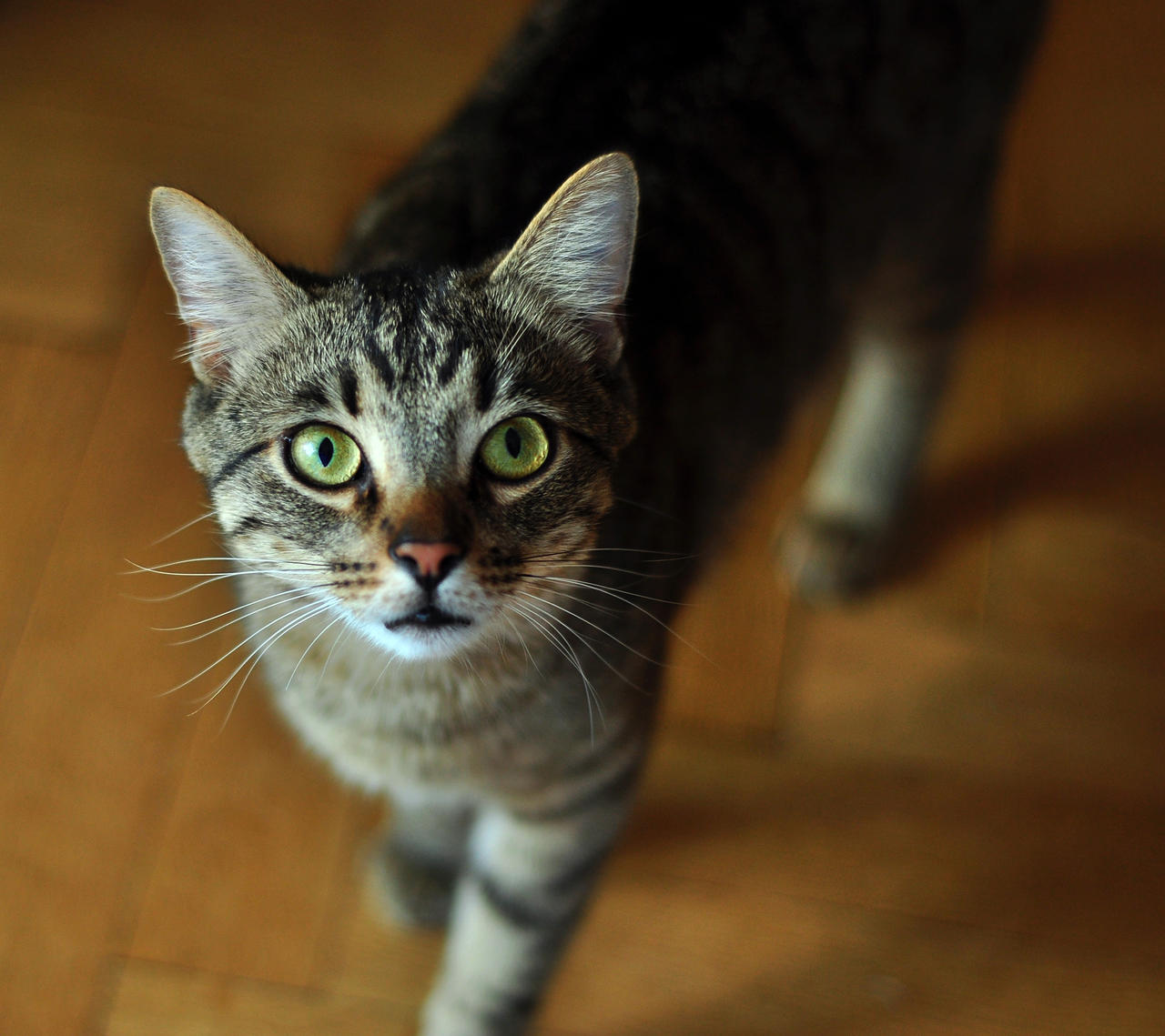 What Is The Whiskas Cat Breed