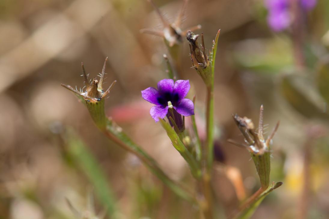 Tiny flower by dottys-friend