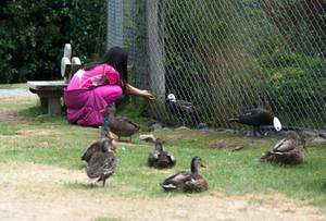 Feeding the birds by dottys-friend