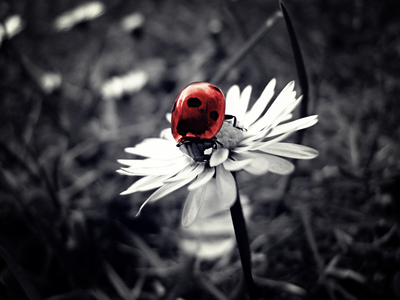 little ladybird by jeally-bullet