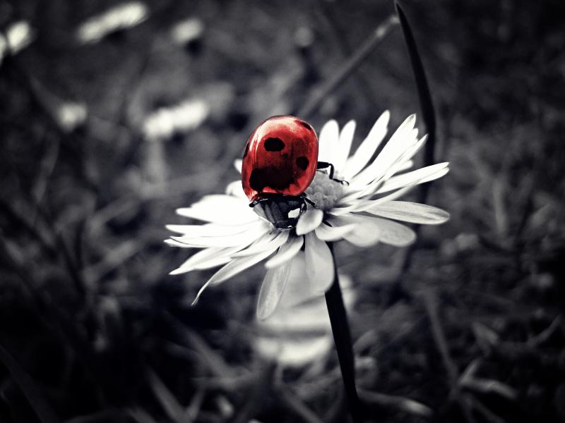 little ladybird by jeally-bullet