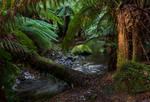 Rainforest Fairyland