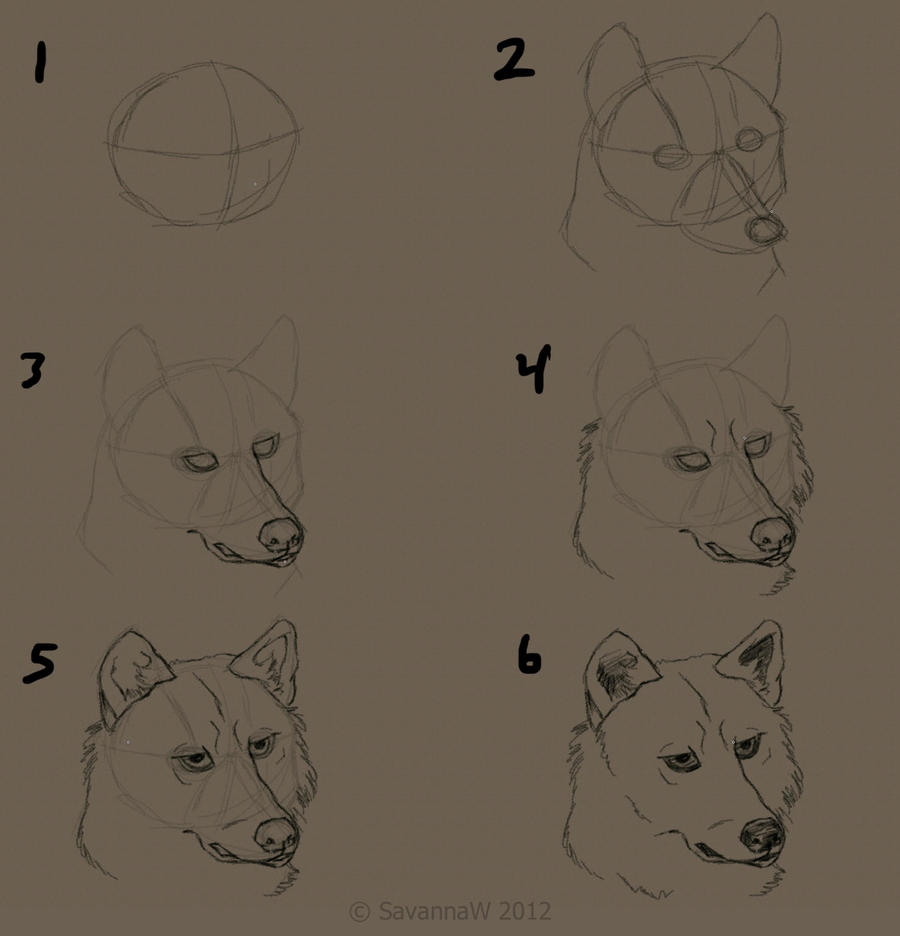 how to draw a wolfs face by savannaw