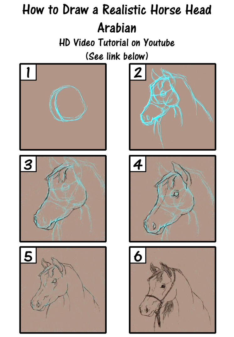 How To Draw A Horse Realistic  Photo#14