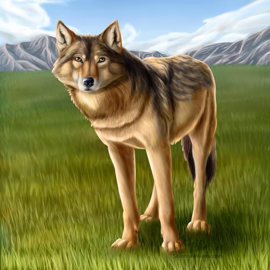 The Wolf by SavannaW