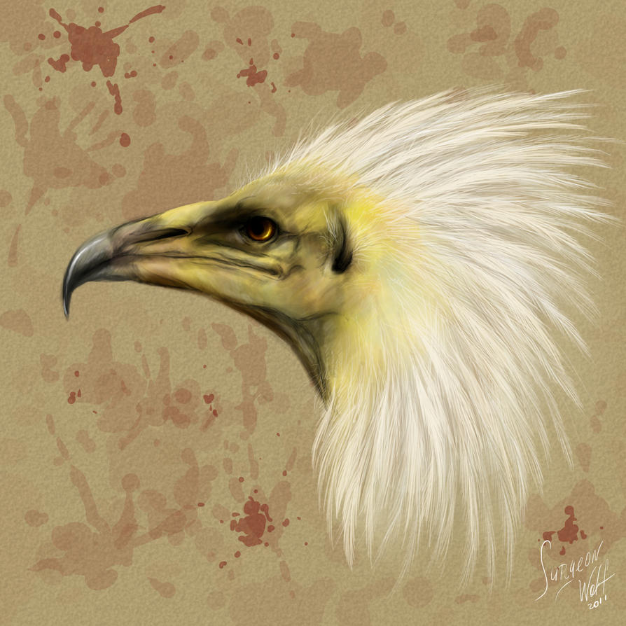 egyptian vulture drawing - photo #17