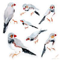 bbird by SurgeonWolf