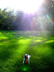Dog Paradise by class-pessimist