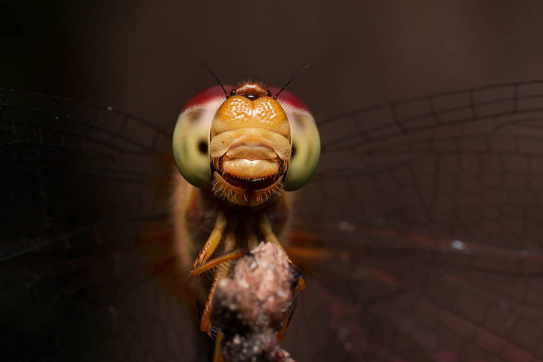 The Art of Insect Portraiture by class-pessimist