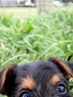 pup. by keaps