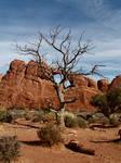 dead tree parallel universes