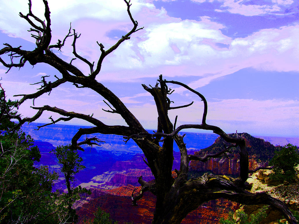NORTH RIM DEAD TREE SURREAL by CorazondeDios