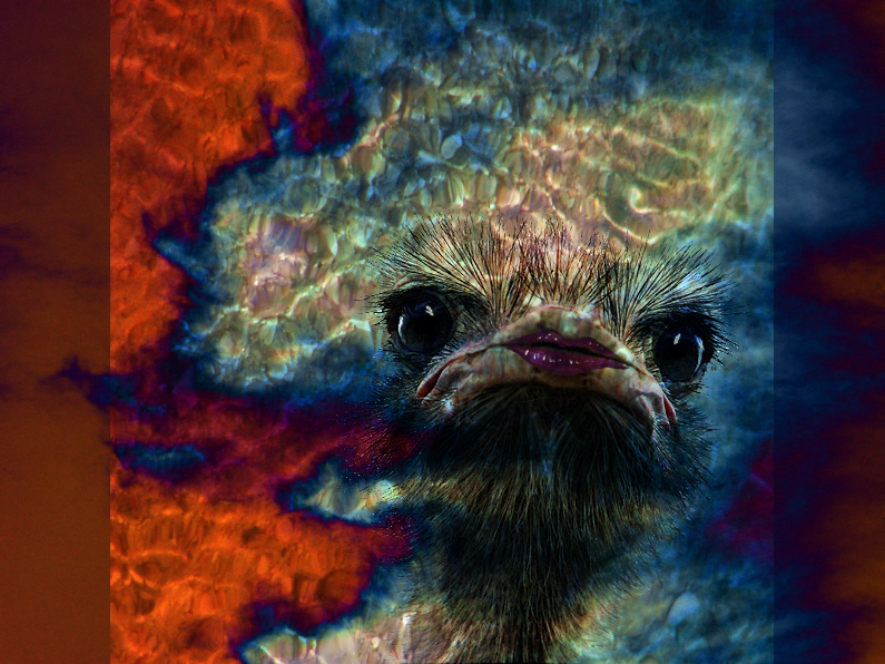 Ostrich on acid by CorazondeDios
