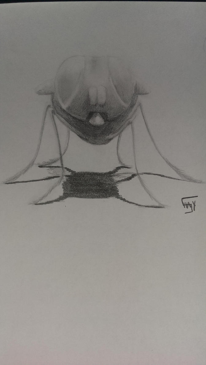 the fly by Shayaga