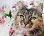 Elsie Cat by micromeg