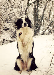 Snow Dog by micromeg